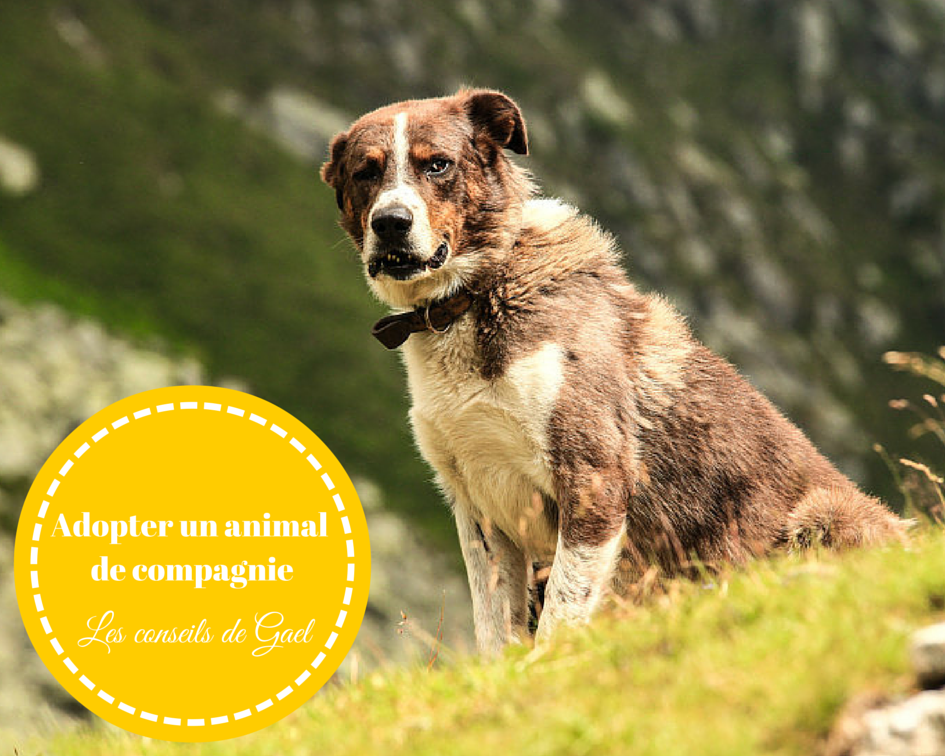 Tout Ce Qu Il Faut Savoir Avant D Adopter Un Animal De Compagnie